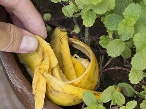 удобрение для цветов из банановой кожуры