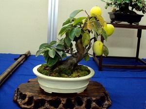 косточка манго вырастить дома