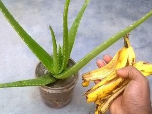 удобрение из банановой кожуры для комнатных