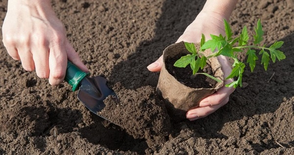 как сажать рассаду в торфяные горшочки