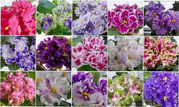 Все про удобрения для фиалок | Синяя гортензия, Гортензия, Синие цветы | 360x600
