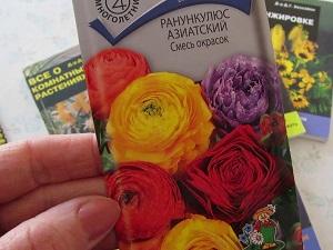 цветок ранункулюс посадка и уход