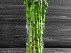 бамбук выращивание в воде