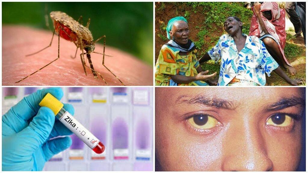 Болезни от комаров