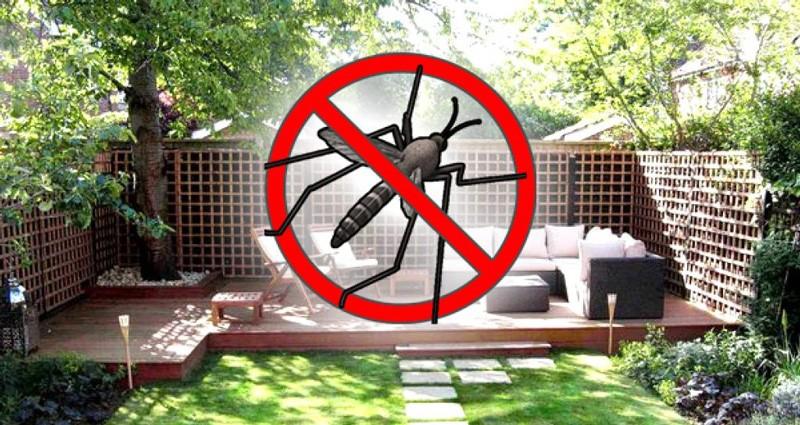 Защитить дом от комаров