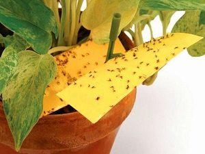 как уничтожить мошек в цветочных горшках
