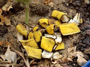 удобрения из банановой кожуры отзывы
