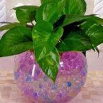 Преобразованный полимер гидрогель для растений: как использовать влаговпитывающие шарики и в чем их преимущества