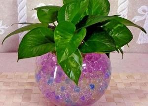 инструкция по применению гидрогеля для растений