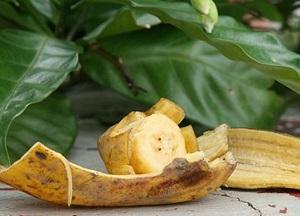 польза банановой кожуры для комнатных растений