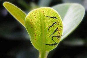 методы борьбы с трипсами на растениях