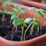 Какие цветы сажать на рассаду в январе — феврале, как повысить всхожесть семян и как проводить закаливание ростков