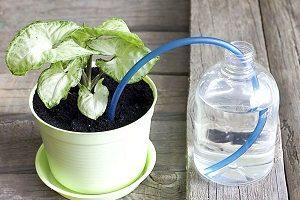 как изготовить атополив для комнатных растений самостоятельно
