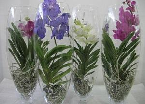 как ухаживать за орхидеей Ванда