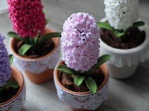 цветок гиацинт фото
