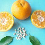 Как вырастить апельсин из косточки в домашних условиях и получить плодоносящее дерево: рекомендации цветоводам по выращиванию экзотического дерева