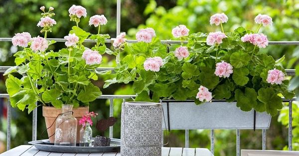 комнатные цветы каталог с фотографиями цветущие
