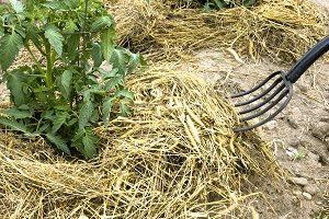 для чего и как проводится мульчирование почвы