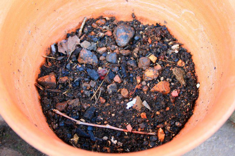 Почва для Базеллы