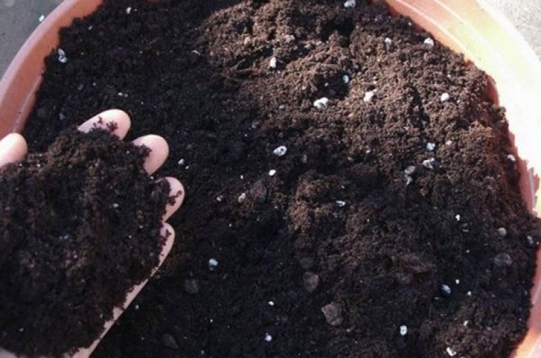 Почва для цитрусовых