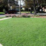 Альтернативные газоны плюсы и минусы