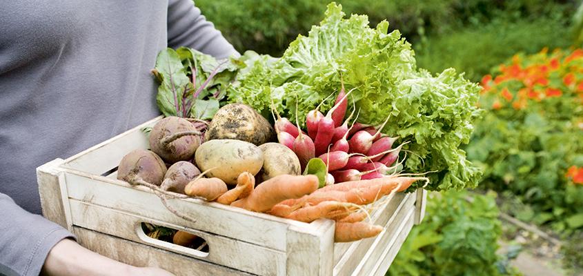 Хранение урожая