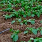 Товары для капельного орошения теплиц и сада