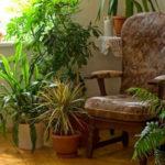 Цветы в доме: как организовать уход без головной боли